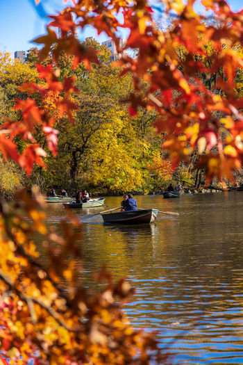 Autumn colors in Central Park Autumn Water Tree Plant Change Nature Orange Color Beauty In Nature Lake Leaf Fall Colors Fall Boat Central Park