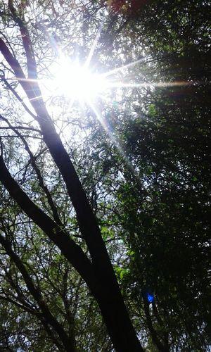 Destello De Sol Fotography La Naturaleza