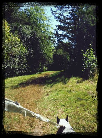 Peace Frenchie Frug Walk Nature