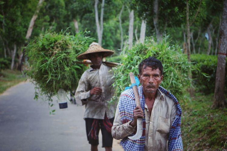Farmer in the tea garden