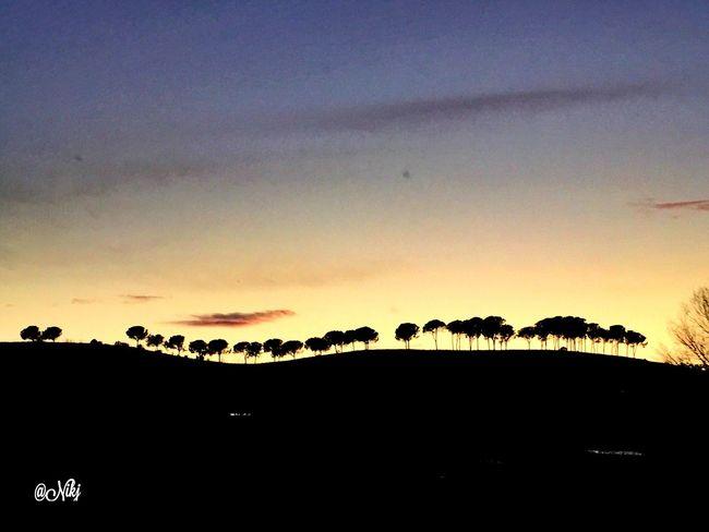 Gli alberi non tradiscono, non odiano, irradiano solo felicità e amore. Ecco perché l'uomo stando vicino agli alberi, avverte una corrente positiva e rigeneratrice. (Romano Battaglia) Sunset #sun #clouds #skylovers #sky #nature #beautifulinnature #naturalbeauty #photography #landscape Sunset #sun #clouds #skylovers #sky #nature #beautifulinnature #naturalbeauty Photography Landscape ? Particolaristupendi Rsa_nature