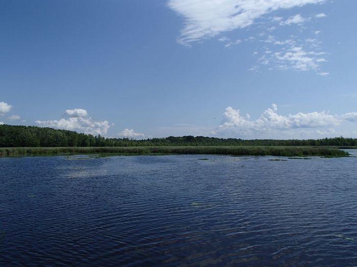 Marais de la Grande Baie (Parc national d'Oka) Swamp Sky Water Cloud - Sky Tranquility Scenics - Nature Tree Tranquil Scene Nature Rippled Outdoors