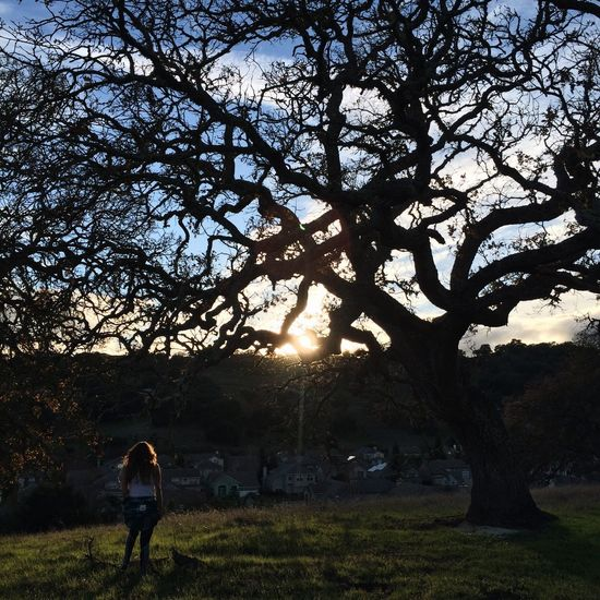 Tree One Person Walking Real People Rear View Full Length Nature Sunlight Silhouette Women Outdoors Lifestyles Grass Men Branch Tree Trunk Standing Beauty In Nature Day Sky