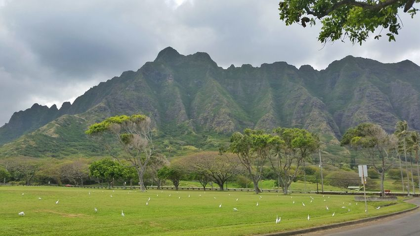 Green Oahu Hawaii Mountains Vacation Relaxing Check This Out