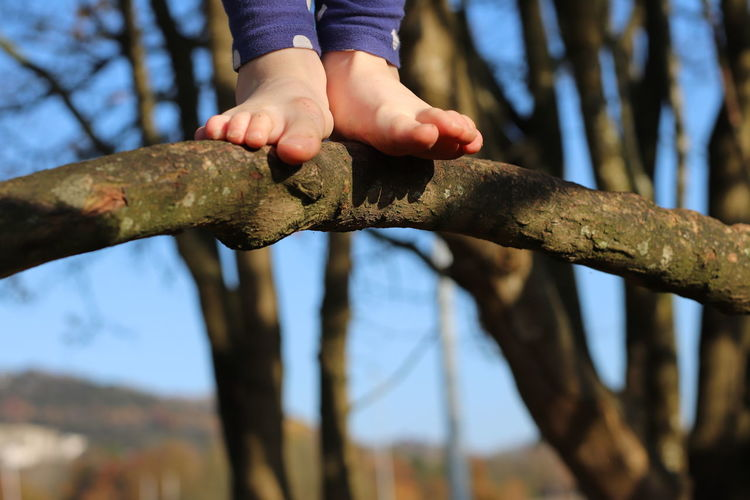 Close-up of hands holding tree