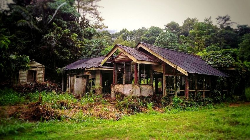 old house Built Structure Grass Architecture Tree House Building Exterior Outdoors Day No People Sky Nature