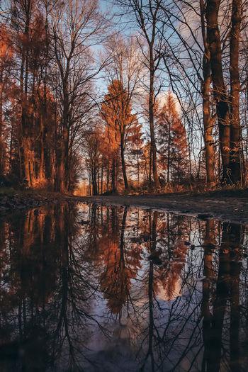 Trees Romantic