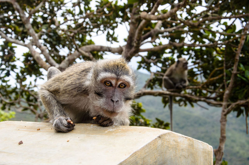 Mauritius Outdoors Fauna Tropical Monkey Animals