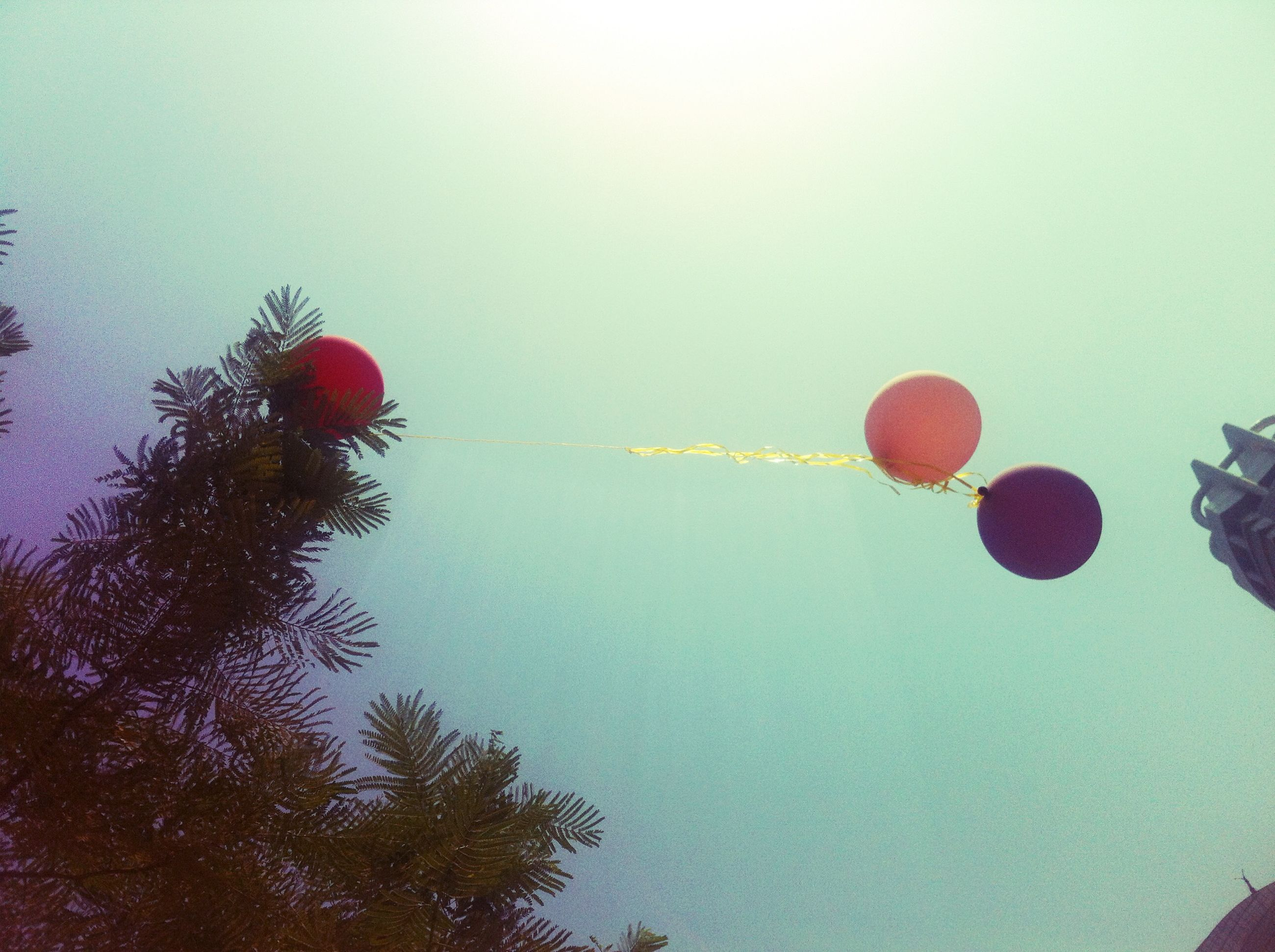 clear sky, tree, low angle view, copy space, red, flying, mid-air, sky, no people, outdoors, multi colored, celebration, bare tree, nature, hot air balloon, blue, hanging, day, balloon, transportation