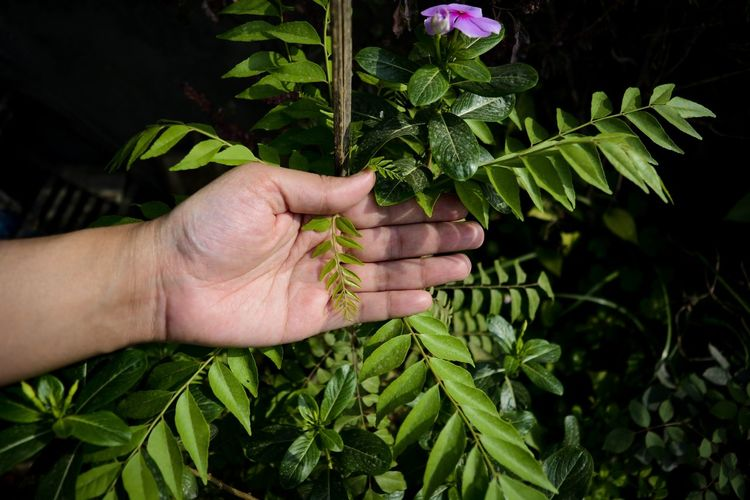 Midsection of person touching plant leaves