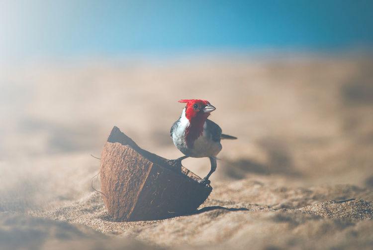 Close-up of bird on the beach