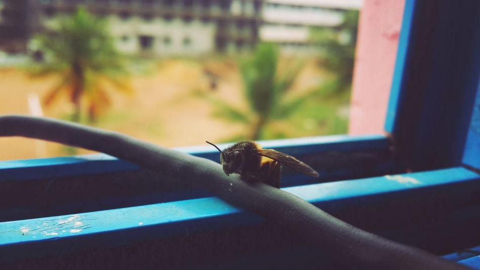 Bees Still Shot Life Quick Capture GALAXY S4 Windows