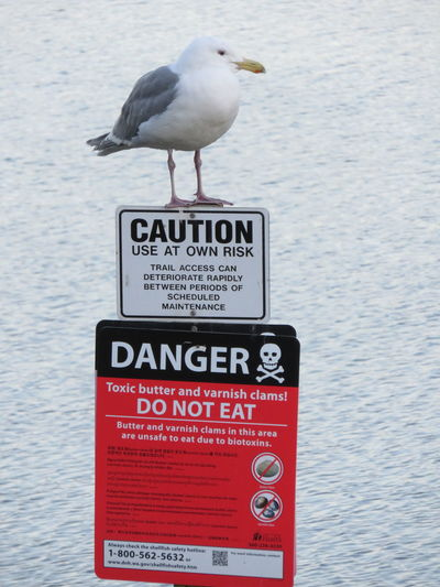 Bird of Doom Clallam County, Washington, United States Defiance Sequim Bay Warning Signs  Animal Themes Animals In The Wild Bird Close-up Focus On Foreground Gull Perching Pollution Sea Seagull Sign Text Toxic Clams Toxic Environment Warning Sign