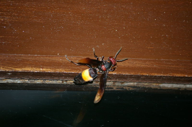 High angle view of wasp on table