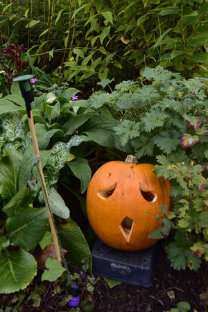 Anthropomorphic Face Art And Craft Beth Chato Gardens Cultures Day Elmstead Market Essex Halloween Halloween Jack O Lantern Jackolantern Leaf No People Outdoors Pumpkin Sad Spooky Vertical