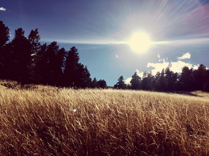 Field Nature Sun Tranquil Scene Beauty In Nature Sky Scenics Landscape Tranquility Sunlight No People Rural Scene Day Outdoors Golden Golden Fields Sunshine Sunny Day Vintage Filter Colorado Colorado Photography Colorful Colorado Hiking Hiking Scene EyeEmNewHere Breathing Space