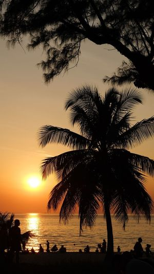 Summer Holiday Tourist Tourism Romania Relaxing Colorful Sun Silhouette Coconut Trees Sunset Palm Tree Tree Silhouette Sea Beach Sun Beauty In Nature Scenics Nature Tranquility Tranquil Scene Sky Idyllic Water Summer Horizon Over Water Growth Outdoors Vacations