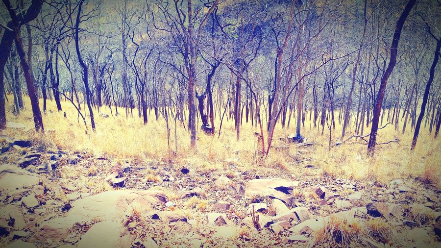 Nalamalla Forest.... Asowme Nature