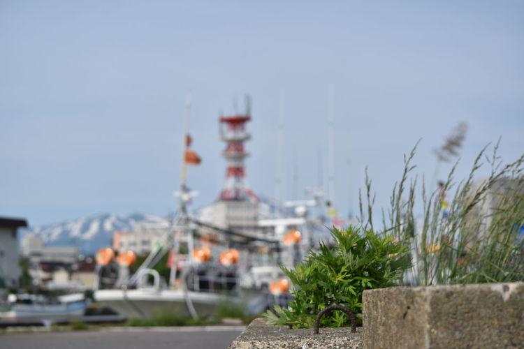 みなとのくさ 烏賊釣り漁船団 Fishing Village Grass Harbor SAKATA YAMAGATA Architecture Block City Copy Space Fishing Fishing Industry Focus On Foreground Sky Tower Travel