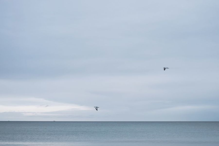 Baltic Sea Ocean Spieri Style Seagull Calm Sea Calm Sea Nature Beach Cold Minimalism Pure Winter Water Horizon Over Water Horizon Landscapes With WhiteWall