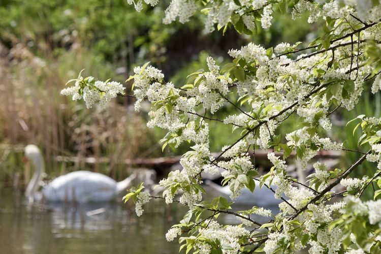Close-up of flowering plant against lake