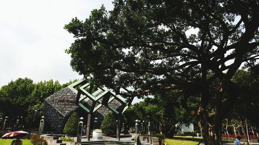 Tree City Branch Sky