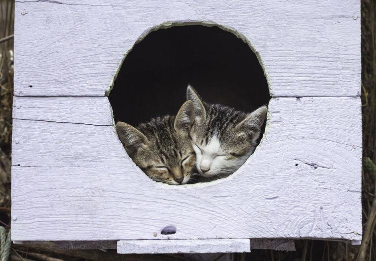 Two kitten sleeping on a birdhouse.