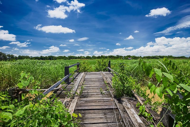 Ruining wooden bridge at the rice field in countryside, Thailand. Field Cloud - Sky Agriculture Growth Farm Day Nature Green Color Landscape Rural Scene No People Plant Scenics Wood - Material Grass Rice Field Thailand View Blue Sky Tree Countryside Lost In The Landscape