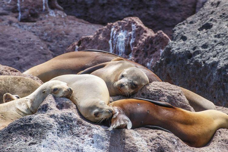 Nature Sea Lion