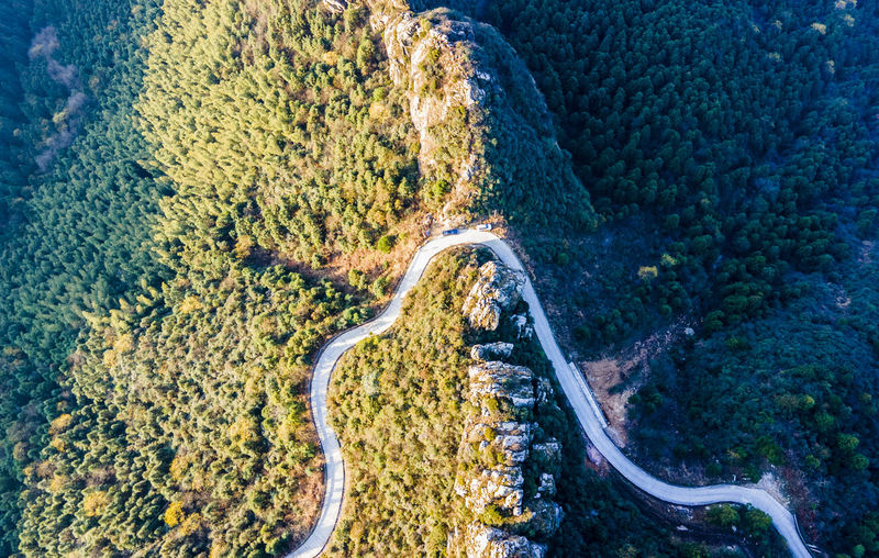 High angle view of road amidst plants
