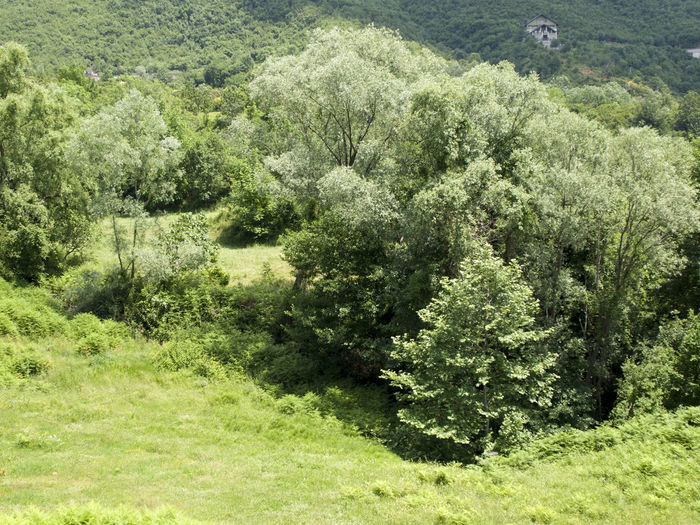 tree and forest