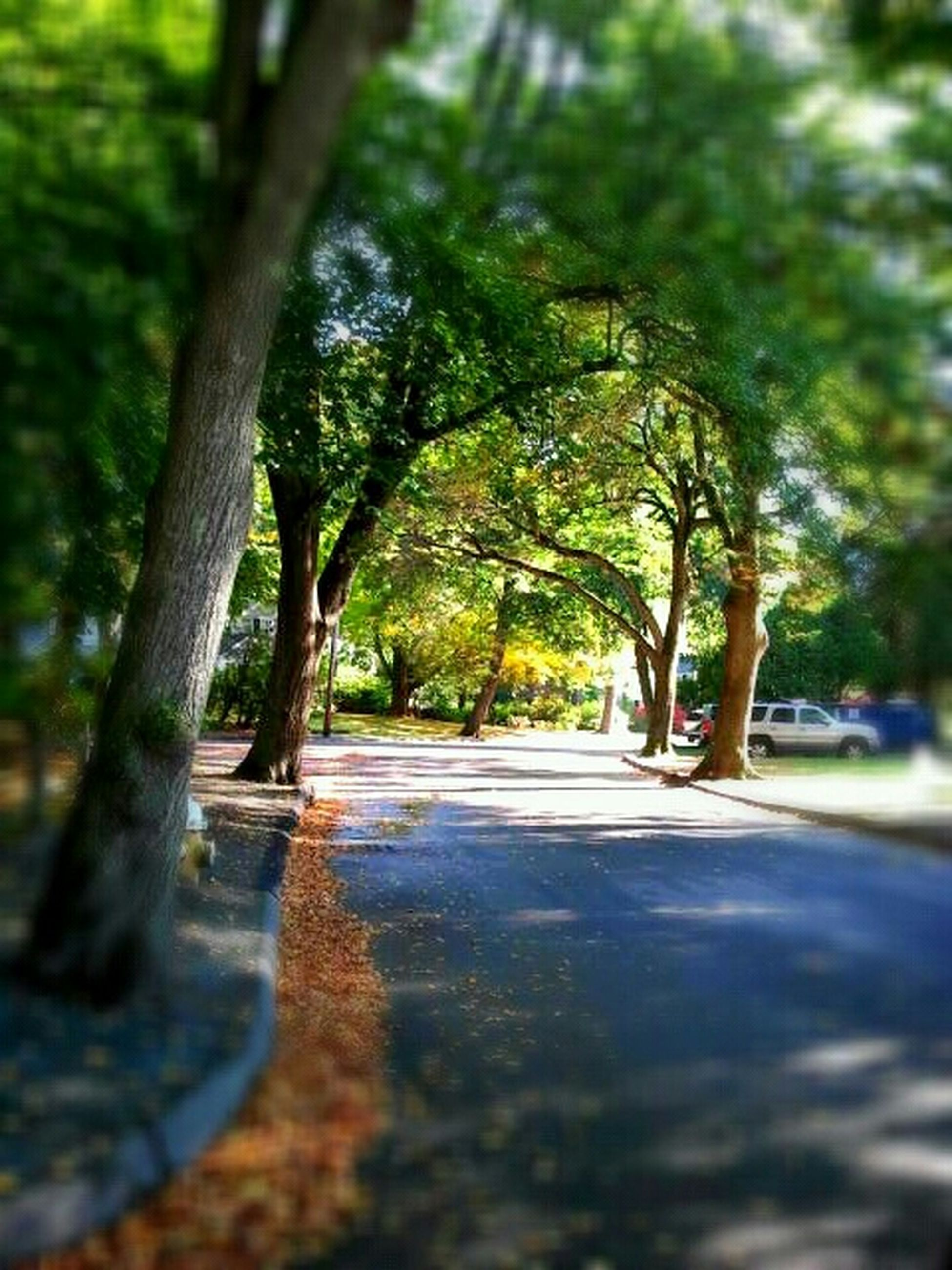 tree, the way forward, tree trunk, forest, road, tranquility, growth, nature, transportation, diminishing perspective, footpath, tranquil scene, street, selective focus, sunlight, treelined, shadow, day, vanishing point, surface level