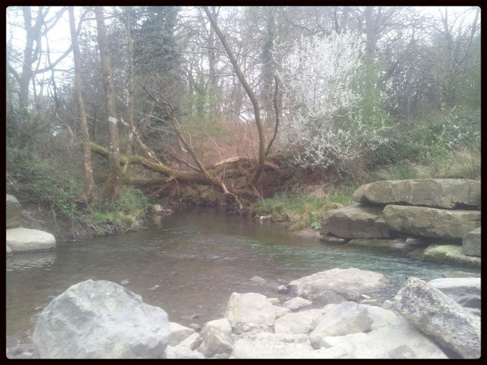 Forest Of Dean & Wye Valley Cannop Ponds Check This Out Nature_collection