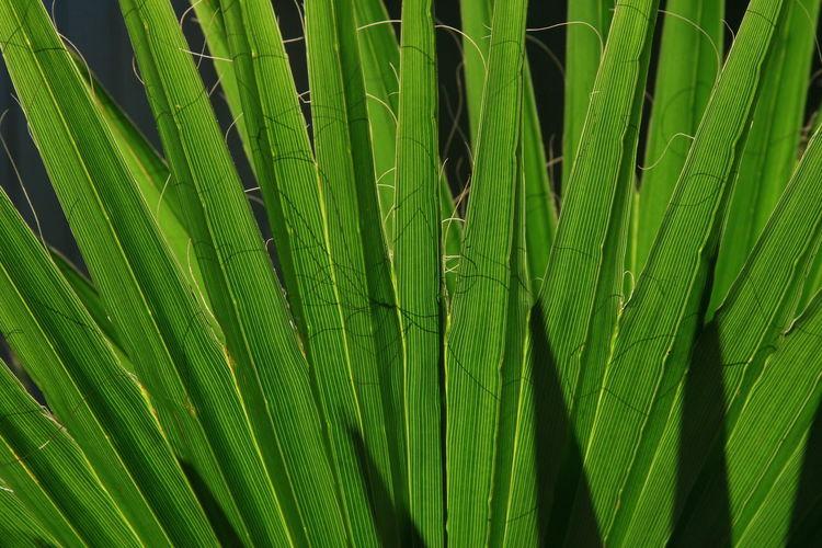 Full frame shot of bamboo plant