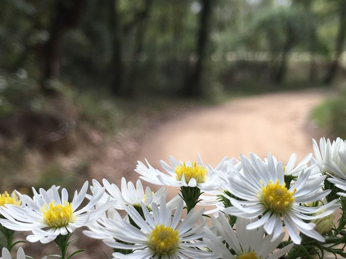 No niegues lo que ya has vivido y no te avergüences de todo lo malo que has pasado. Necesitas tiempo para darle un significado a lo que has vivido y para entender cómo te ha afectado. Beauty In Nature Flowers Flower Collection Path In Nature Path Nature Nature_collection Walk Walking