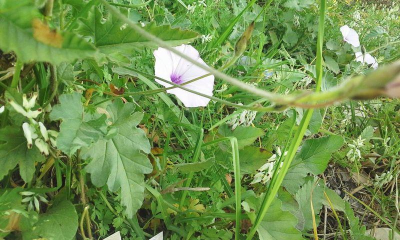 Today's shot 🌿🍃🌸 EyeEm Nature Lover Beautiful Nature EyeEm Flower