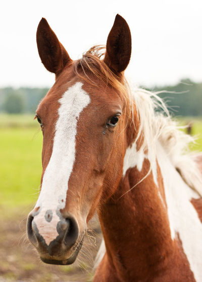 Close-up of horse in field