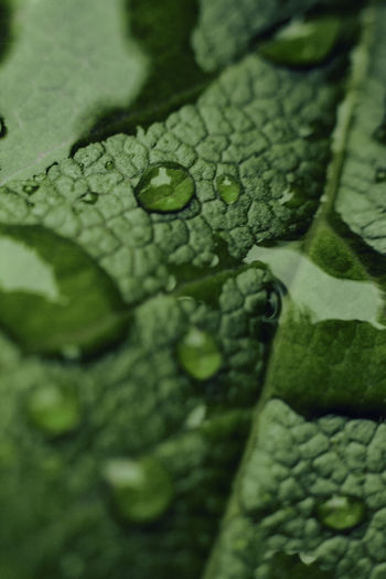 #details #drops #leaf #macro #water Backgrounds Beauty In Nature Freshness Green Color Leaf Nature No People