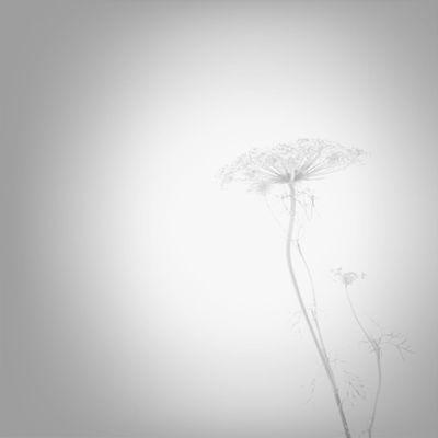 Flowers Blackandwhite White Album Monochrome_Monday