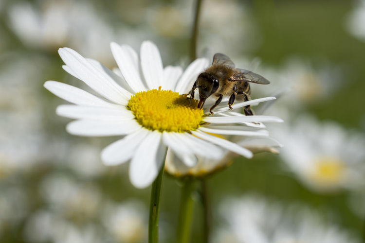 Flowering Plant Flower Animal Themes Fragility Beauty In Nature Animal Animals In The Wild One Animal Invertebrate Petal Plant Insect Vulnerability  Animal Wildlife Growth Flower Head Freshness Close-up Inflorescence Bee Pollen Pollination No People