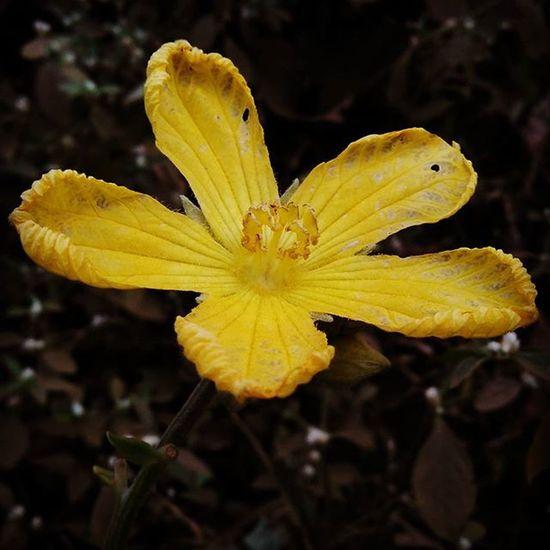 Bloom Redmi2Prime