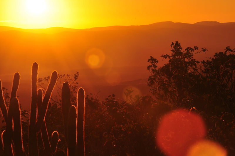 Atmosphere Beauty In Nature Cactus Close-up Focus On Foreground Growth Idyllic Lens Flare Majestic Mountain Mountain Range Nature Non-urban Scene Orange Color Outdoors Plant Remote Scenics Sky Sun Sunlight Sunset Tranquil Scene Tranquility Uncultivated