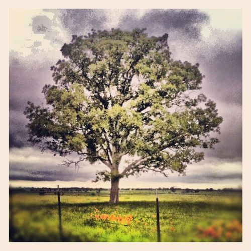 Wide open spaces Jj_forum Ignation Landscape 15likes Tree 25likes Field Instacanv One Photoadayapril Photooftheday Teg Picoftheday Got_talent All_shots Treestyles_gf_picoftheday Instamood Treestyles_gf Ig 10likes Unitedbyedit Jj  30likes 20likes