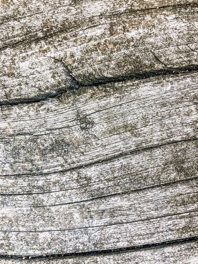 White Wood Surface Wallpaper Wood Structure Wood Surface Wood - Material Wood Full Frame Backgrounds Pattern Textured  No People Close-up Day Abstract Cracked White Color Wrinkled Chaos