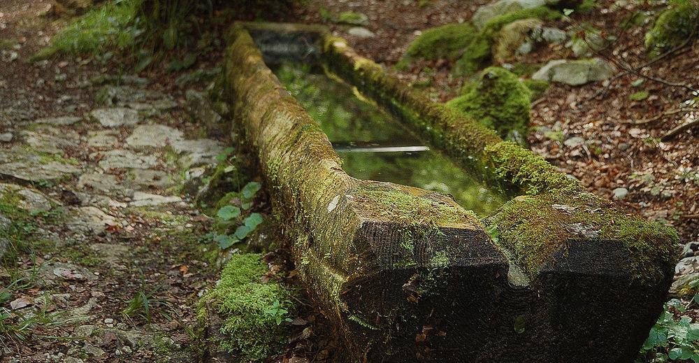Gorges de la Pouetta Raisse Abreuvoir Branch Eau Green Color Igerssuisse Montagne Moss Nature No People Stone Tranquility Tree Trunk Water