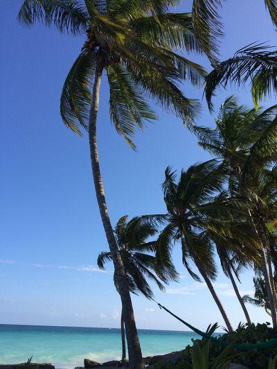 Crystal Ball Palm Trees Palm Trees Tropical Tropical Beach Tulum Beach Tulum, Mexico Yucatan Mexico Yucatán, México Yúcatan