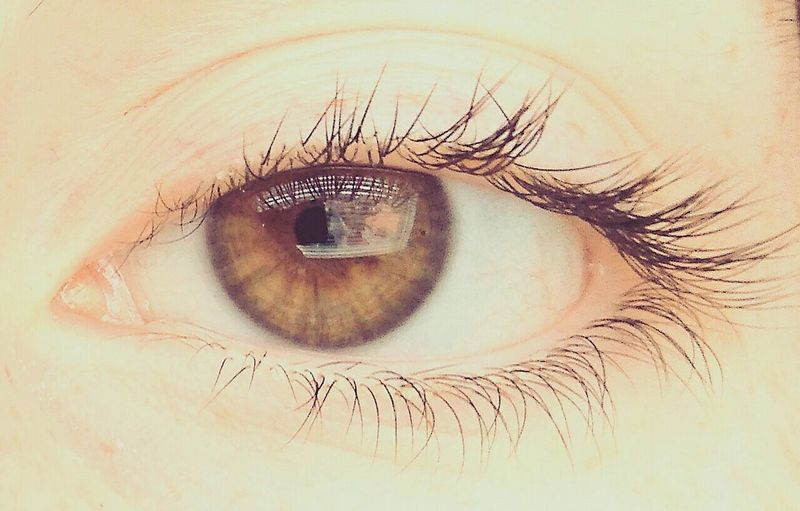 Human Eye Eyelash Lost Novyjicin Eye Sunny Day 🌞 Sunny☀ Myeye Seeing The World Differently Eyesight Looking At Camera Gate To My Spirit