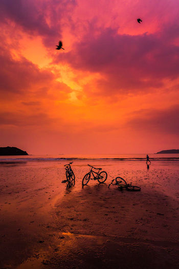 Cycle Animal Themes Beach Beauty In Nature Bird Cloud - Sky Day Flying Horizon Over Water Nature No People Orange Color Outdoors Sand Scenics Sea Silhouette Sky Sunset Tranquil Scene Tranquility Water