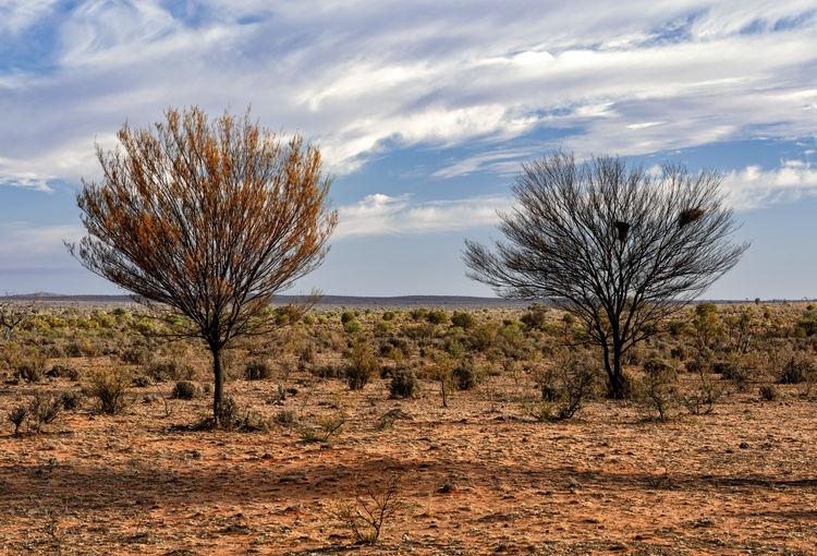 Arid Climate Bare Tree Cloud - Sky Dry Isolated Landscape No People Non-urban Scene Remote Semi-arid Sky Tree