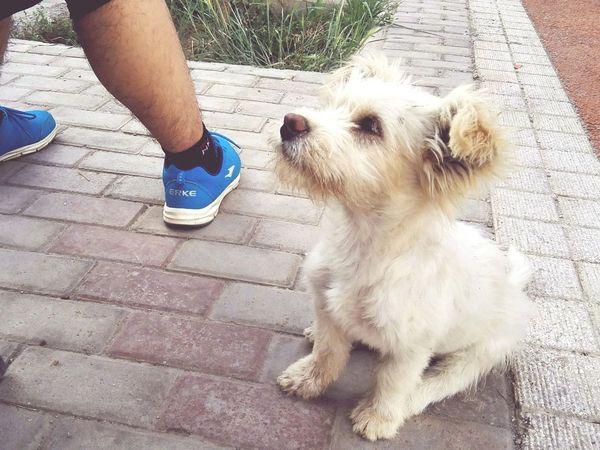 Dog Pets Pet Portraits